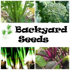 Spring 4 Pack: Beetroot, Broccoli, Celery and Spring Onion