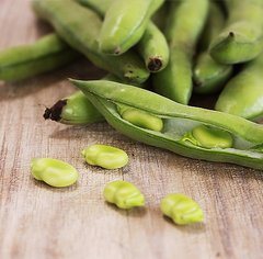 Broad Bean - Yarra Green