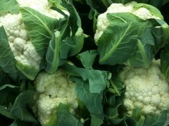 Cauliflower - Lecerf