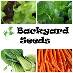 Winter/ Spring 4 Pack: Carrot, Lettuce, Pak Choi, and Silverbeet