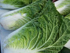 Chinese Cabbage - Wong Bok
