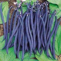 Beans - Purple Dwarf