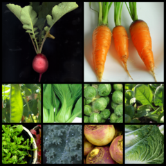 Autumn Heirlooms - 10 Vegetable Seed Varieties