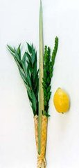 Lulav/Etrog sets - Pre-order your own set