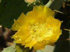 Cactus Flower Soap