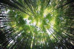 Central Florida Bamboo Plants