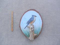 Titmouse (small)