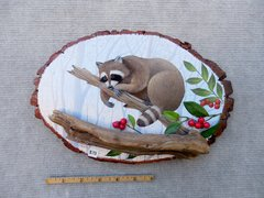 Raccoon  (medium)