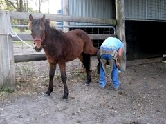 Donate a Farrier Trim