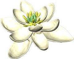 Jasmine & Magnolia pot