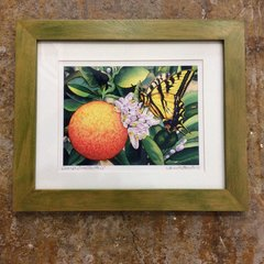 Framed Prints by Jane Brewster