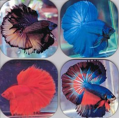 Beta Fish coasters ( set of 4 as pictured)