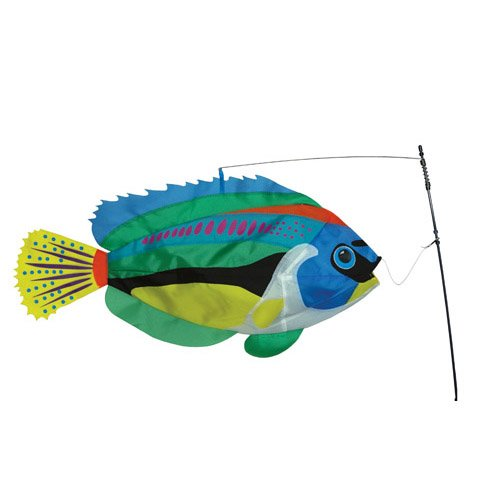 Swimming Peacock Wrasse Fish by Premier