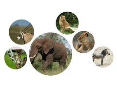 Did you know...African animals