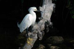 Egret in Black