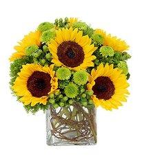 Sunflower Surprise - und12