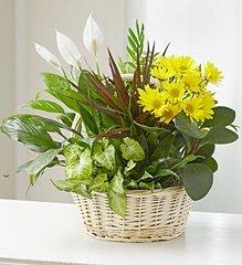 With Love Dish Garden & Fresh Cut Flowers - hom11
