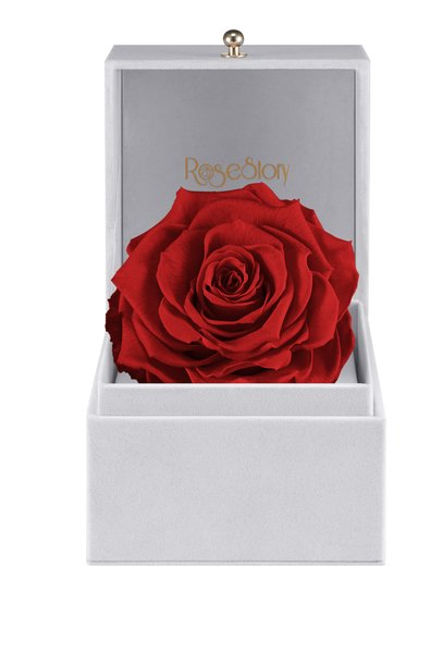 Rosestory forever love exquisite single red rose gift box forever love infinite rose gift box romance red negle Choice Image