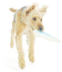 Planet Dog Zoom Flyer 9.5 inch Glow/Blue