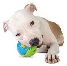 Planet Dog Orbee Ball-Medium-Blue/Green