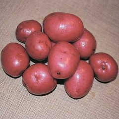 Potato Seed, Red Pontiac