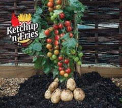 Grafted Ketchup 'n' Fries