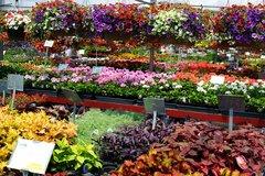Annuals Flowering