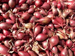 Onion Sets, Red