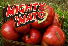 Grafted Brandywine Mighty Mato