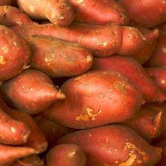 Sweet Potato Slip, Georgia Jet