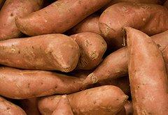 Sweet Potato Slip, Beauregard