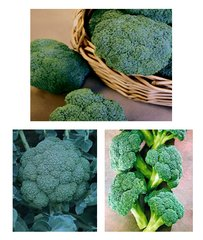 Broccoli Multi 6 Pack