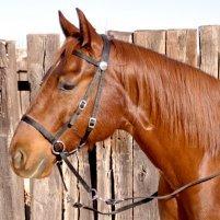 Nurtural Horse Nylon Bitless Bridle (Intrepid)