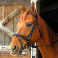 Exselle Wide Dressage Bridle (Intrepid)