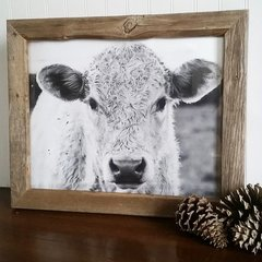 Shiloh The Cow