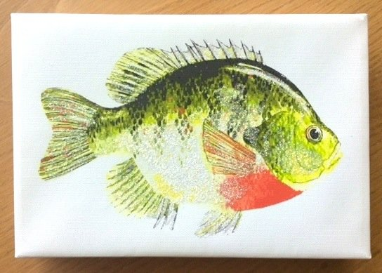 Glittered Canvas Wall Art - Fish 1 - US Shipping is included ...
