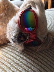 Sunglasses 4 Dogs