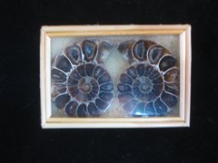 Small Split Ammonite Pair