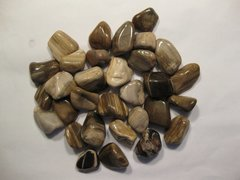 1 lb. Petrified Wood Tumbled Stones