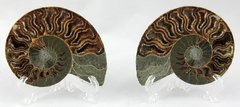 Split Ammonite Pair