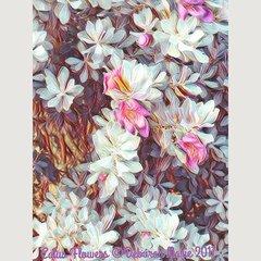 Catus Flowers