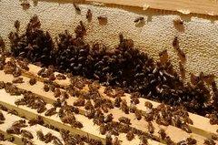 Beginning Beekeeping Workshop at Magnolia Plantation