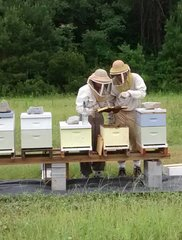 Apiary Experience, Personalized